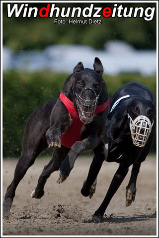 Greyhound_Dopping_Hutch-big